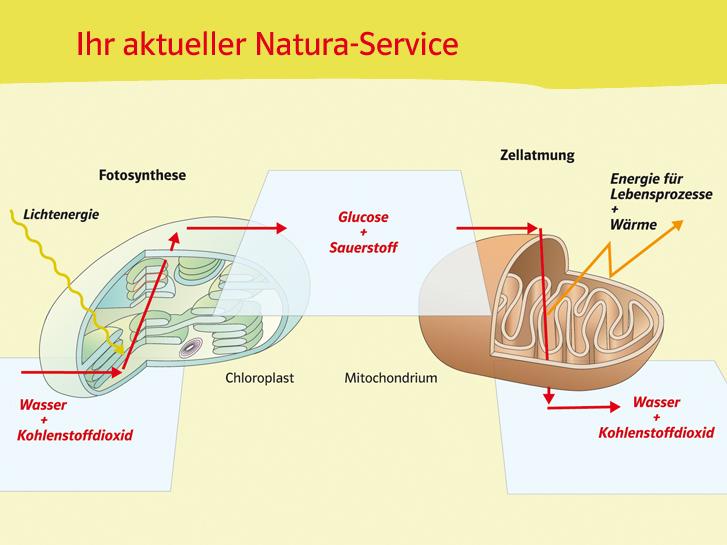 Ernst Klett Verlag - Natura Biologie Ausgabe Nordrhein-Westfalen ...